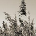 201302_grasses_8493766220