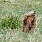 201302_groundhog_8438093833