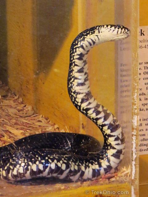 Snake Species Of Ohio At A Glance Trekohio
