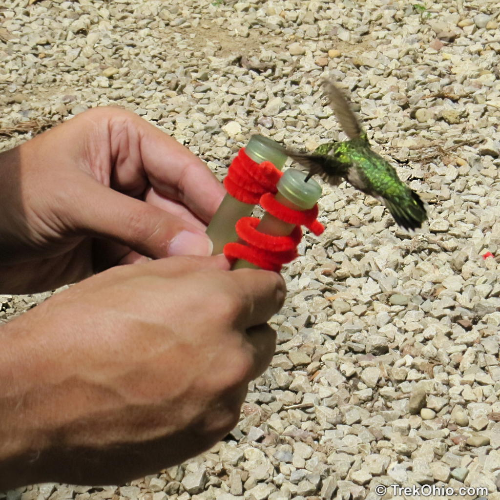 Praying Mantis Catches Hummingbird Picture – National Geographic Society (blogs)