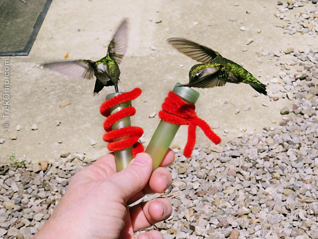 How To Attract Hummingbirds - Housewife How-To's®