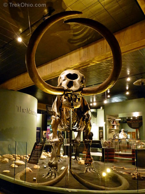 Mastodon skeleton at Ohio History Center