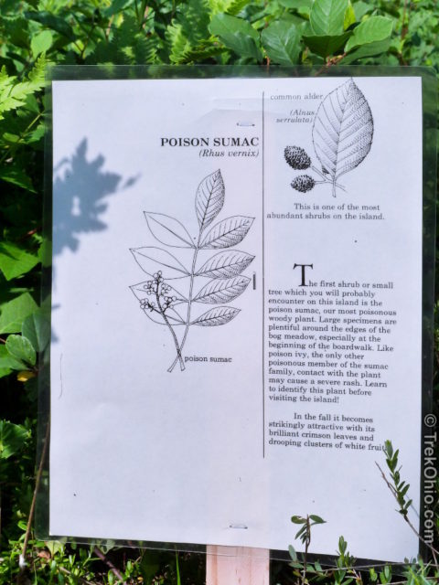 Sign posted in front of posion sumac at Cranberry Bog State Nature Preserve