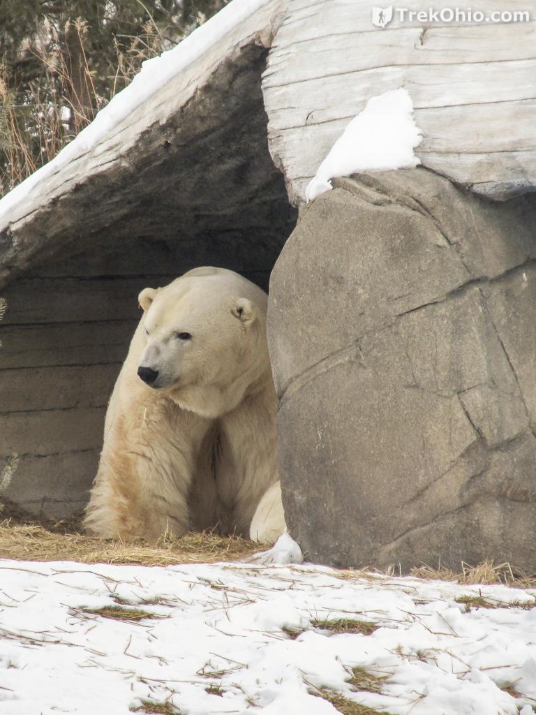 Great Weather For Polar Bears Trekohio
