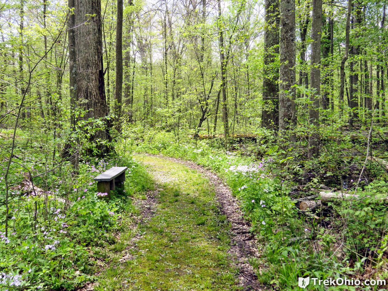Goll Woods State Nature Preserve | TrekOhio
