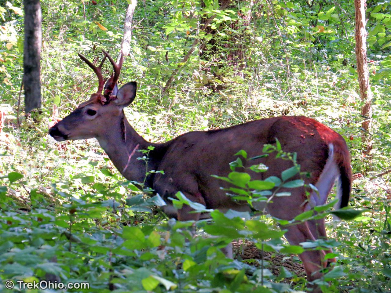 ohio deer hunting season 2017 2018 trekohio