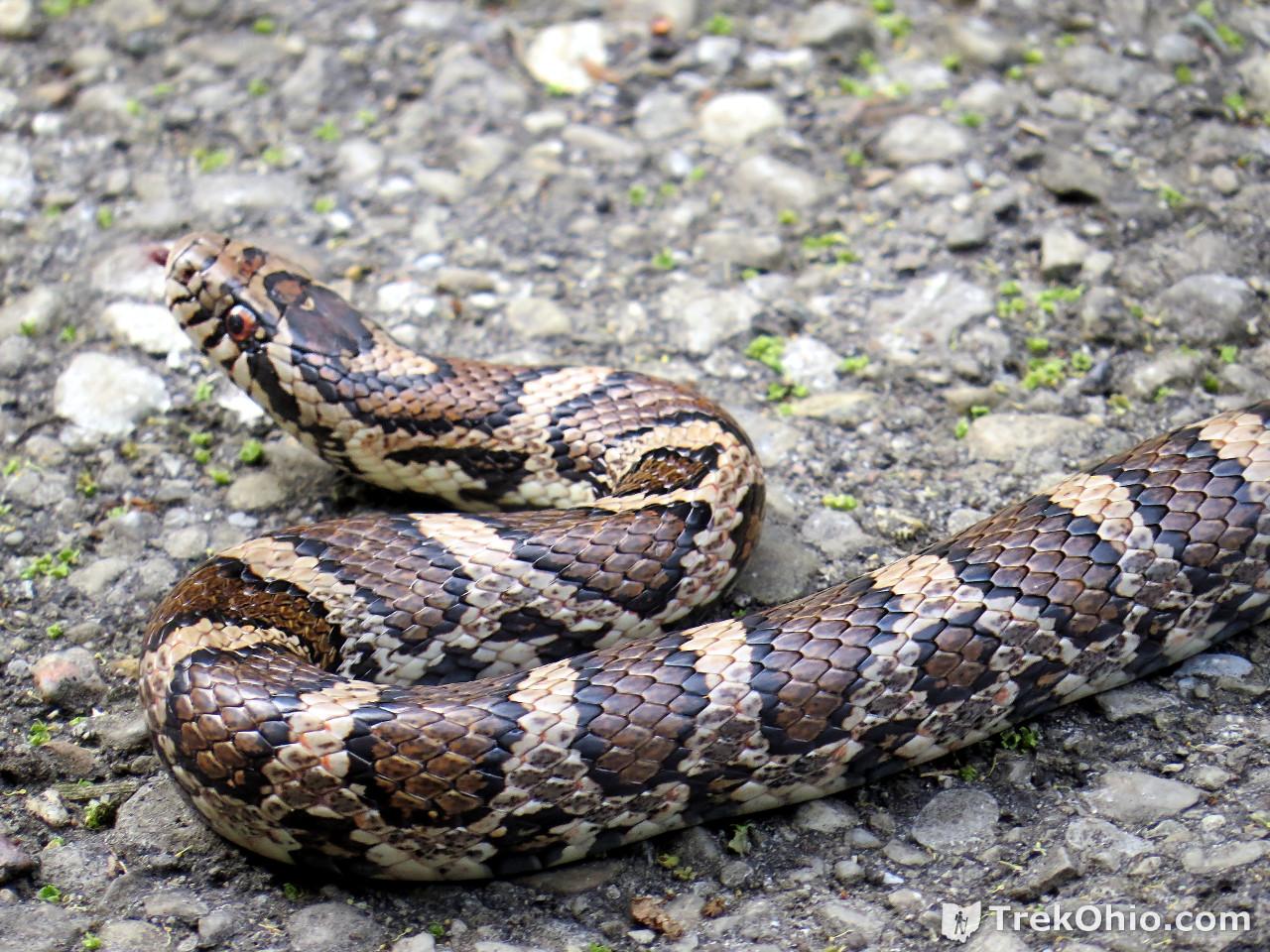 snake - photo #37
